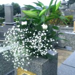 飯塚の墓地から福岡へ。お墓のお引越し【遺骨の改葬】