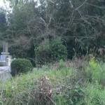 草をかき分け、墓地の現地確認へ【粕屋郡宇美町の地域墓地】