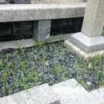 新宮霊園と福岡市立平尾霊園へ【お墓建立とお墓じまいの下見に】