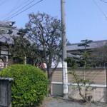福岡市東区の寺院墓地にて現地確認を行いました。