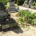 成長してしまったお墓の樹木の抜根、外柵縁石の修繕等を行いました。福岡市博多区崇福寺様にて